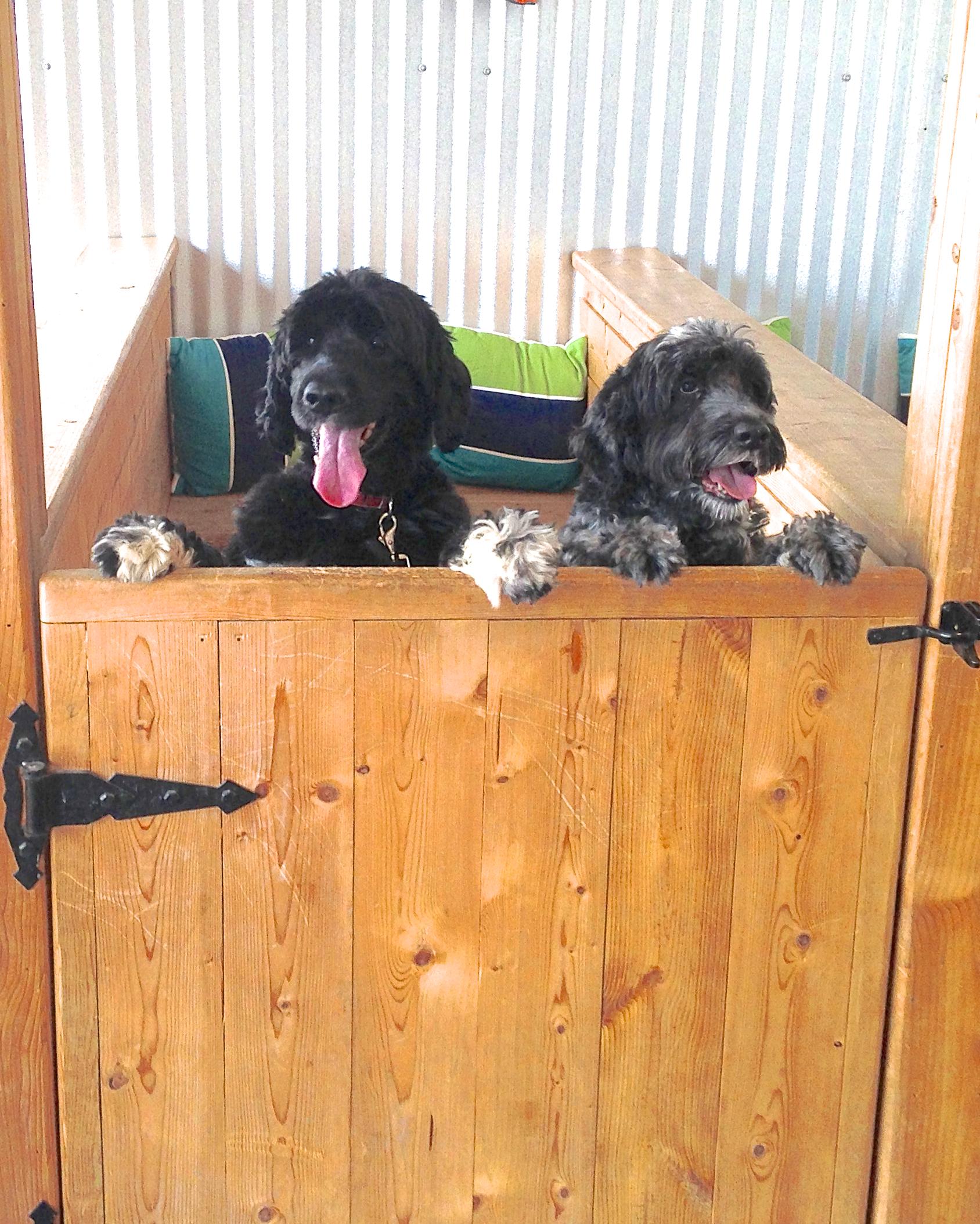 Cooper & Chelsea