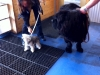 dogs-rockstar-and-dewey-visit-the-royal-treatment-veterinary-center