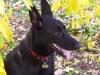 googoo-the-dog_0