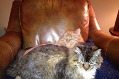 Wrigley & Philip