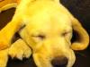 Sleepy Quincy