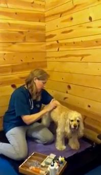 Oprah's Dog Sadie Gets Acupuncture from Chicago Vet Barbara Royal