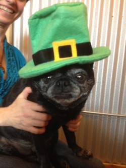 St. Patrick's Day - Roxie