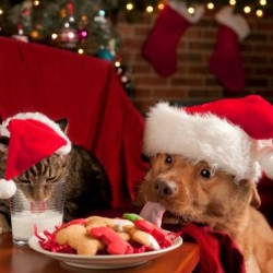 holiday-pets