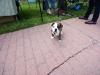 11wo-bulldog