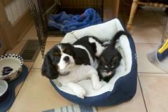 Bogie & Zooey