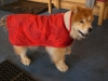 Fluffy dog at RTVC