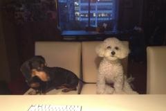 Coco & Tito