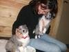 puppies-visit-chicago-veterinarian